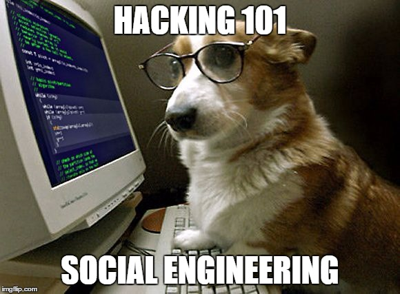 Corgi dog meme, coding on computer